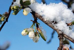 Ülke genelinde kar yağışı hayatı feç etti